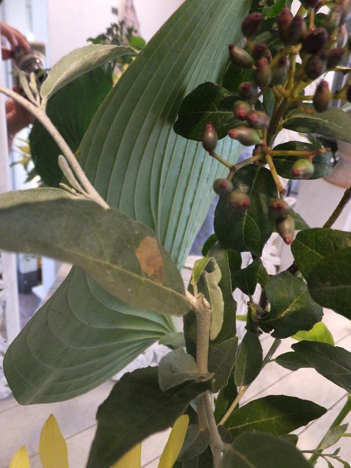オークリーフ花の教室(田中さんの作品)_f0049672_17544964.jpg