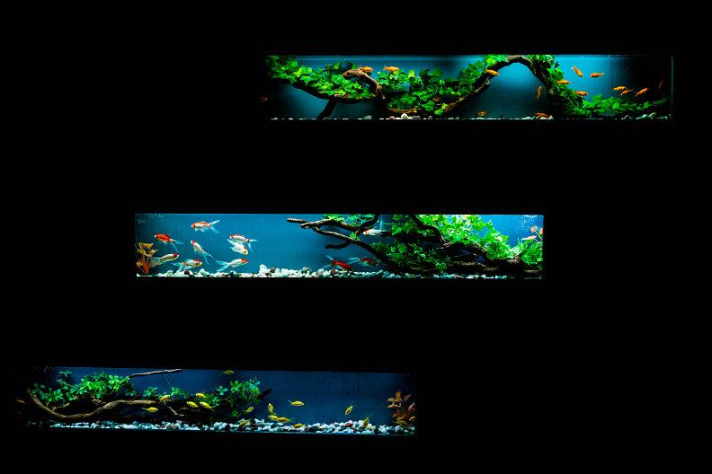 アートアクアリウム展 ~広島・金魚の祈~_f0189086_19111127.jpg