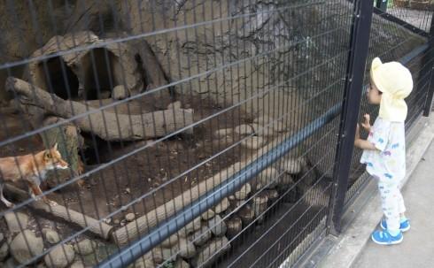 井の頭公園の動物園&遊園地_f0006713_21083966.jpg