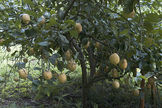漁村のレモン畑_d0159062_18343741.jpg