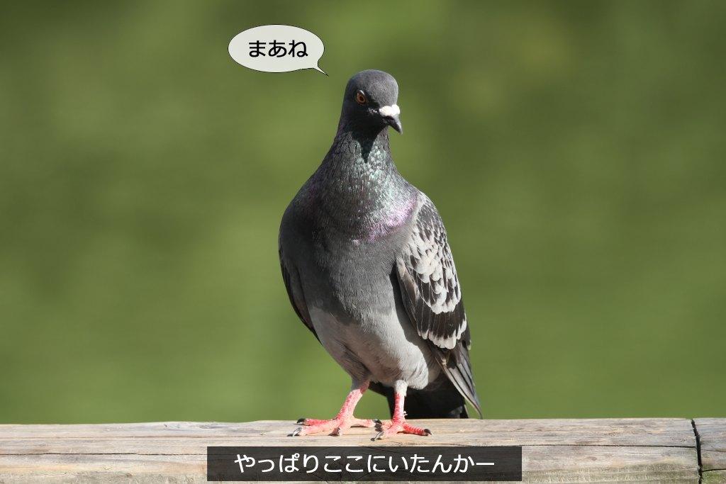 b0174191_15122250.jpg