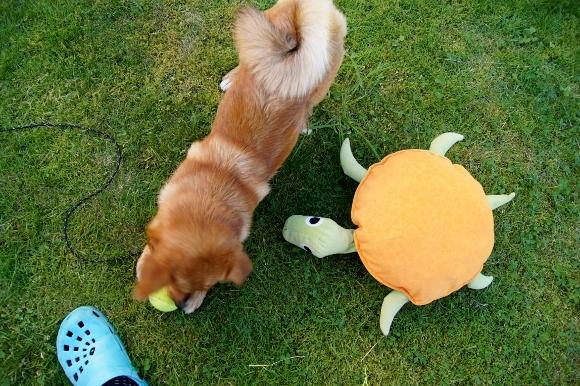 子犬と暮らすってこんなに大変!_d0241813_07314327.jpg