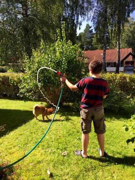 子犬と暮らすってこんなに大変!_d0241813_18143457.jpg