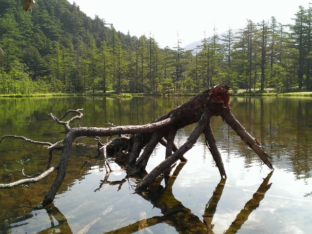 信州へ避暑旅行 オマケ_e0118846_15592998.jpg