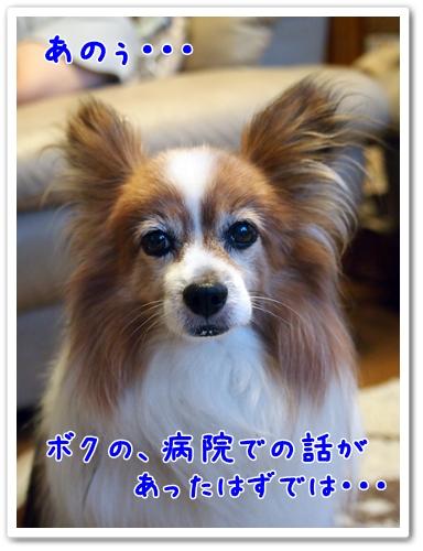 d0013149_1511383.jpg