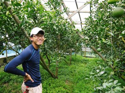 デコポン(肥後ポン) 摘果作業後の成長の様子_a0254656_17255187.jpg