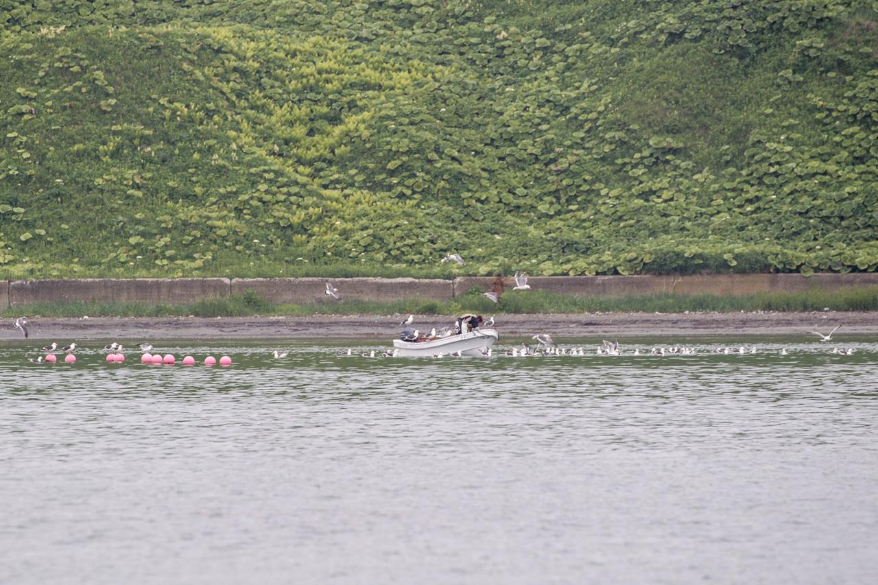 ウミウ、オオセグロカモメ、ウトウ   北海道旅行その36  落石クルーズ_a0052080_22040062.jpg