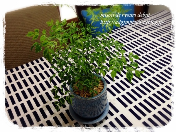 最近仲間入りした植物たち_b0343192_09362530.jpg