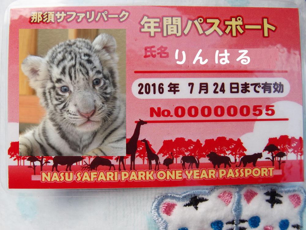 2015.8.14 那須サファリパーク☆ホワイトタイガーのマハロとライオンののぞむ_f0250322_163052.jpg