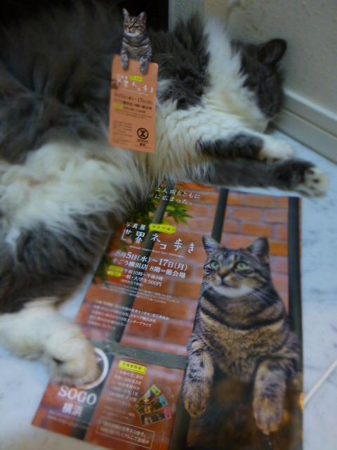 世界ネコ歩き 写真展 in 横浜_e0237625_21345635.jpg