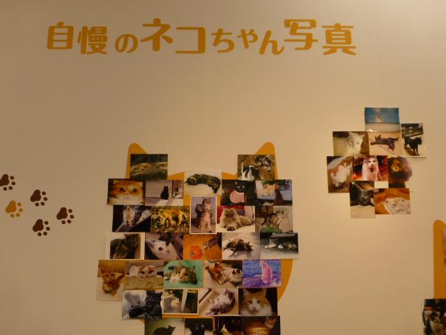 世界ネコ歩き 写真展 in 横浜_e0237625_21391486.jpg
