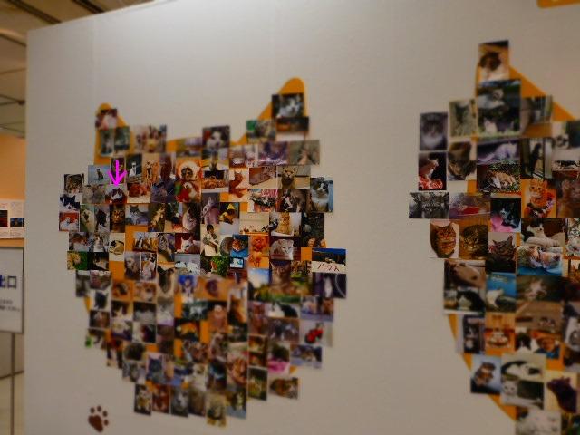 世界ネコ歩き 写真展 in 横浜_e0237625_21425830.jpg