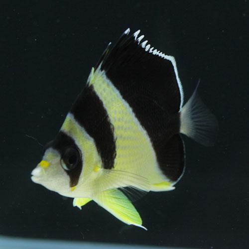 少しのサンゴと海水魚・・・。_d0221436_23144737.jpg