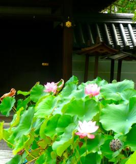 妙心寺お精霊送り _b0325640_1123891.jpg