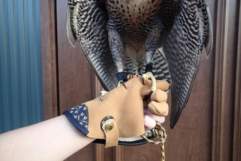 グローブギャラリー-3- 印伝 (glove gallery -3- Inden)_c0132048_1232216.jpg