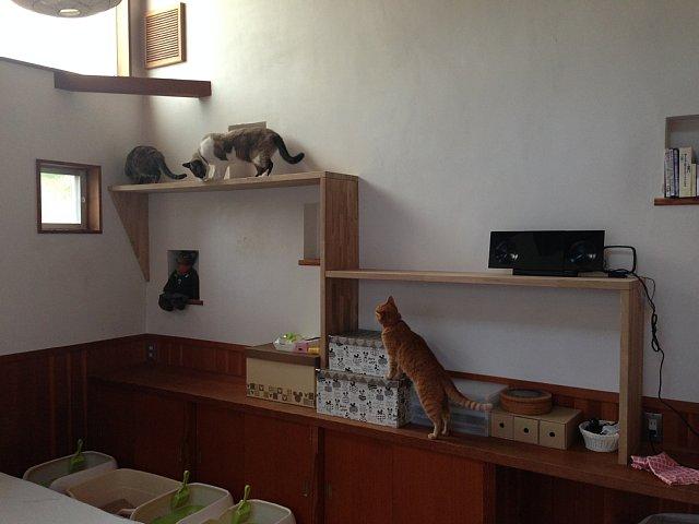 Cat Walk_d0157491_11511350.jpg