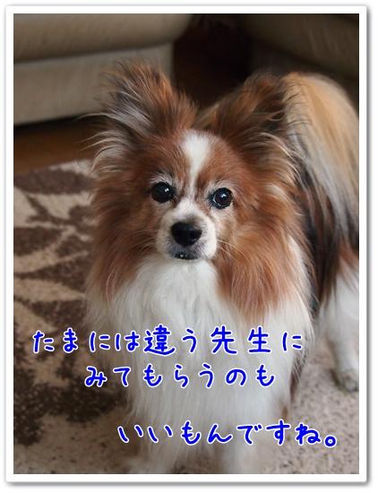 d0013149_22281039.jpg
