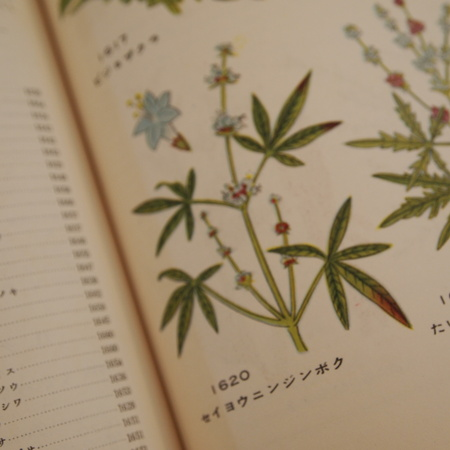 原色植物大図鑑_a0292194_121616100.jpg