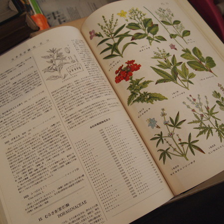 原色植物大図鑑_a0292194_12162100.jpg