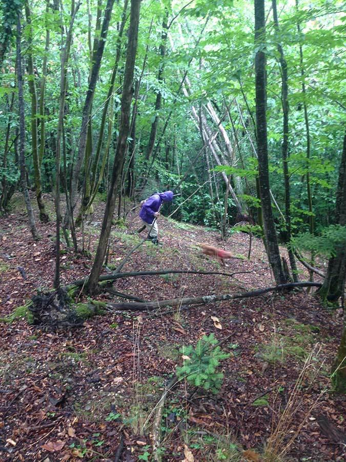 森を歩いたりピザを焼いたり_f0106597_05152293.jpg