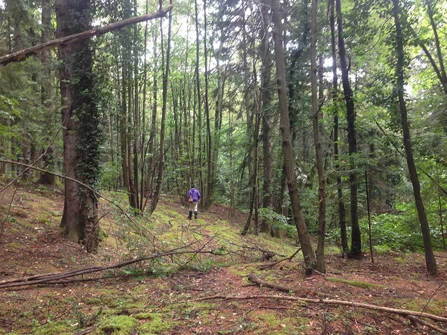 森を歩いたりピザを焼いたり_f0106597_05163110.jpg