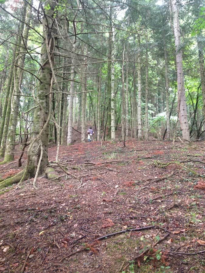 森を歩いたりピザを焼いたり_f0106597_05171500.jpg