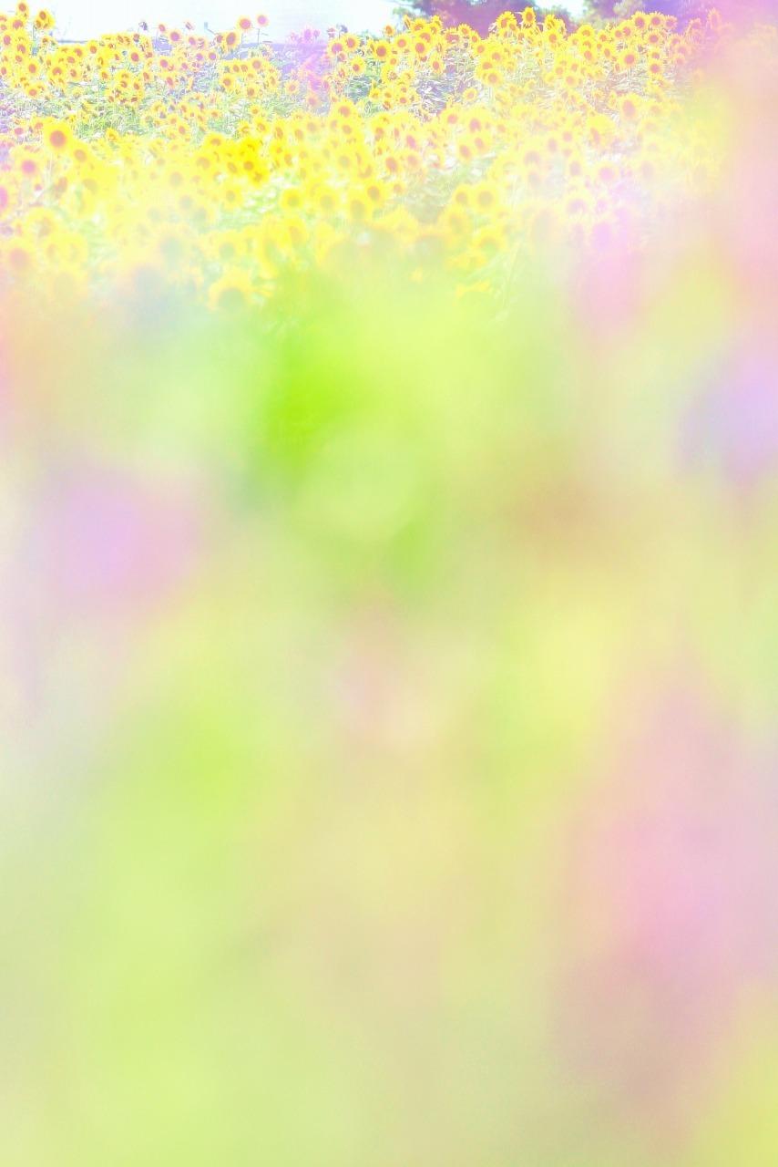 e0298415_02211412.jpg