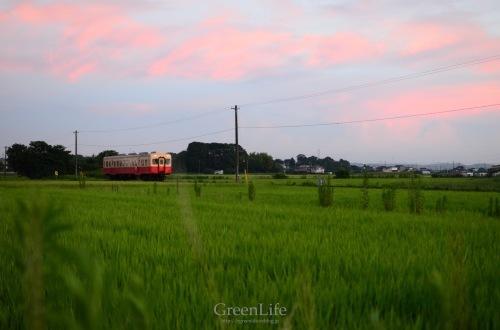 ひまわりと小湊鉄道_f0321522_10144311.jpg