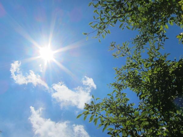 Hurray! The SUMMER has returned!! ―万歳!夏が返ってきたぞ!―_b0174425_11031441.jpg