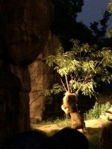 ナイトZOO in天王寺動物園_a0059035_01231872.jpg