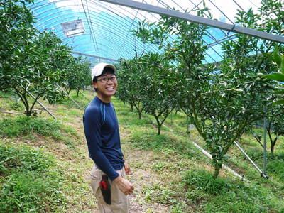 究極の柑橘「せとか」 摘果、玉つり作業後の様子 匠の摘果作業の話_a0254656_1930209.jpg