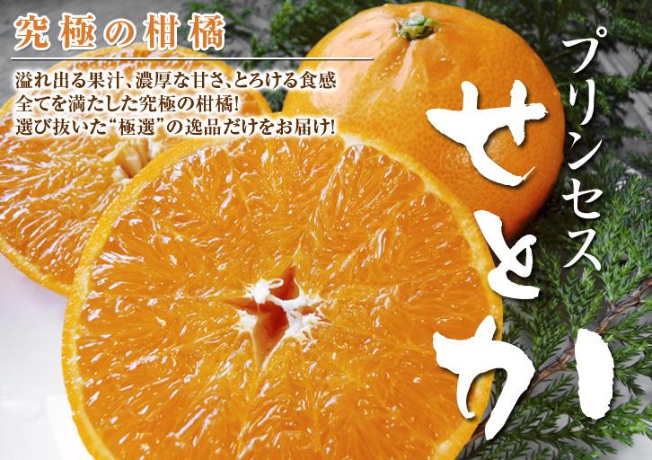 究極の柑橘「せとか」 摘果、玉つり作業後の様子 匠の摘果作業の話_a0254656_1984492.jpg