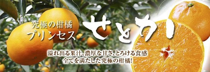 究極の柑橘「せとか」 摘果、玉つり作業後の様子 匠の摘果作業の話_a0254656_20252365.jpg