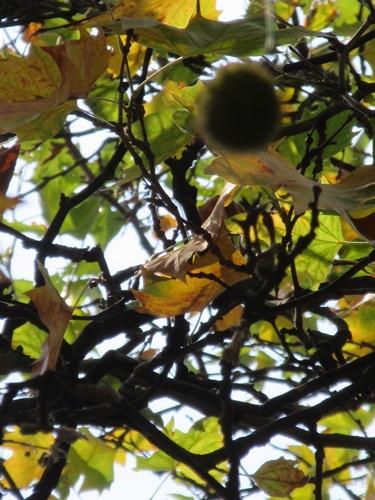 Herbstwind_e0116763_0571183.jpg