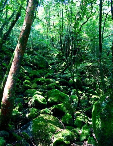 世界自然遺産「屋久島」の白谷雲水峡で山ガールにチャレンジ♪_a0138976_14173940.jpg