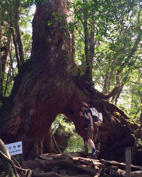 世界自然遺産「屋久島」の白谷雲水峡で山ガールにチャレンジ♪_a0138976_14183352.jpg