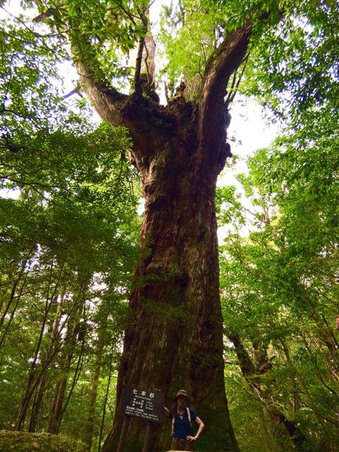 世界自然遺産「屋久島」の白谷雲水峡で山ガールにチャレンジ♪_a0138976_14184938.jpg