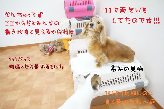 d0220513_17471344.jpg