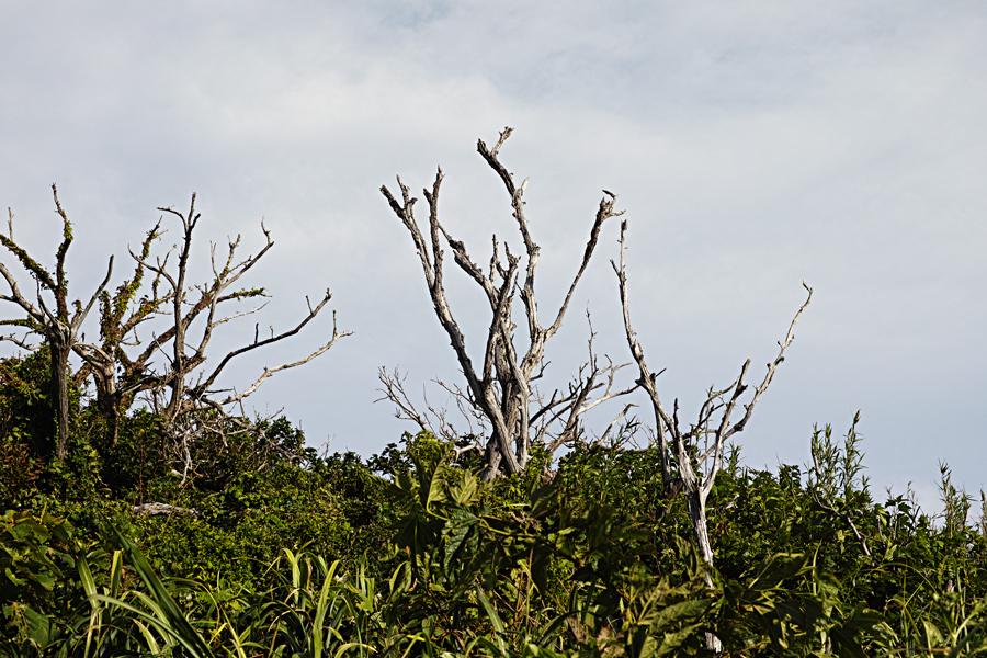 神津島特集④ありま展望台~千両池(後半)_c0223825_01553104.jpg
