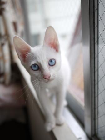 猫のお留守番 ルヴィーちゃん編 + ハリネズミのお留守番 クゥーくん編。_a0143140_214113100.jpg