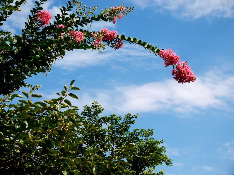 花のある風景_b0093754_21234671.jpg