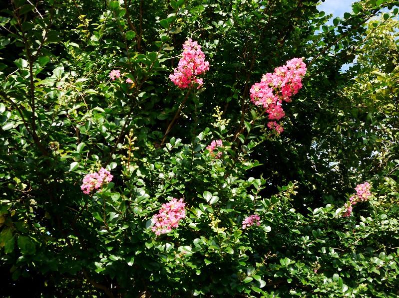 花のある風景_b0093754_21235670.jpg