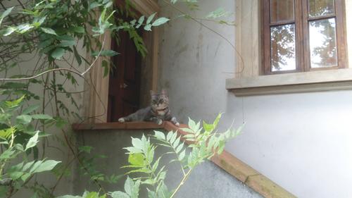イタ猫FUJIの脱走&新しい出会い@山の家!!_c0179785_2215165.jpg