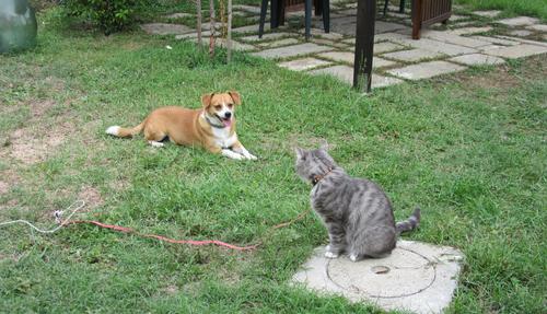 イタ猫FUJIの脱走&新しい出会い@山の家!!_c0179785_22185174.jpg