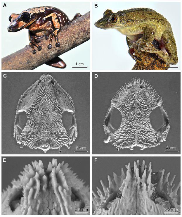 毒針で相手を攻撃する毒ガエルが発見された_c0025115_19221143.jpg