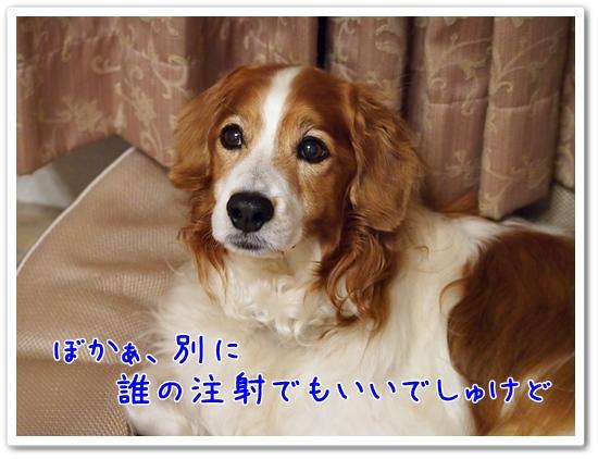 d0013149_2236936.jpg