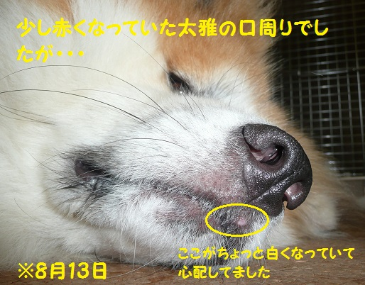 f0121712_8151653.jpg