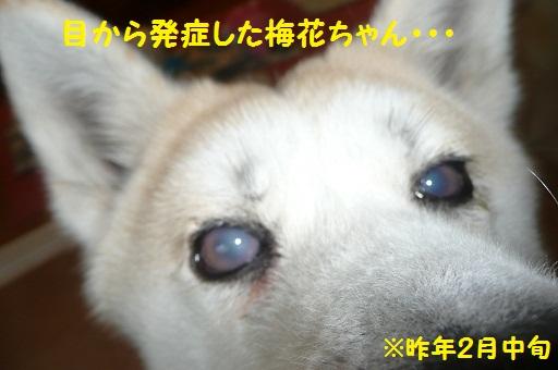 f0121712_821396.jpg
