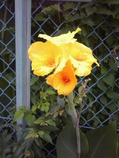 実りの秋ならぬ、実りの夏も_b0255217_1681355.jpg