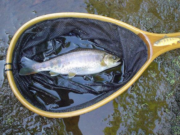 8月21日(金)の釣り日記_f0280717_20113926.jpg